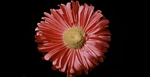საპოვნელა (Song About a Flower, 1959)