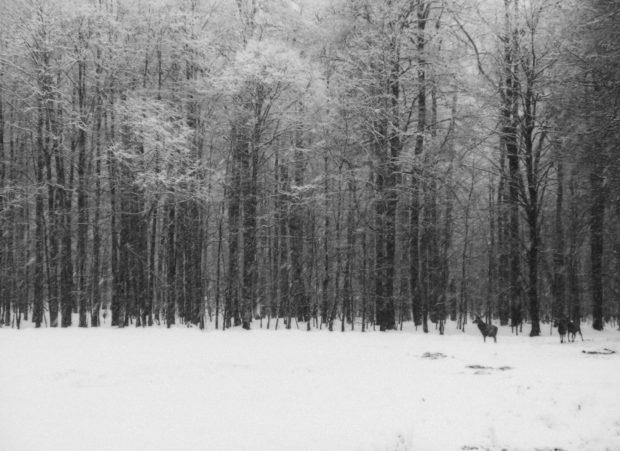 Winterreise, de Inés García